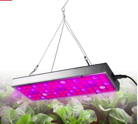 Best LED Lamps for Growing Your Vegetables